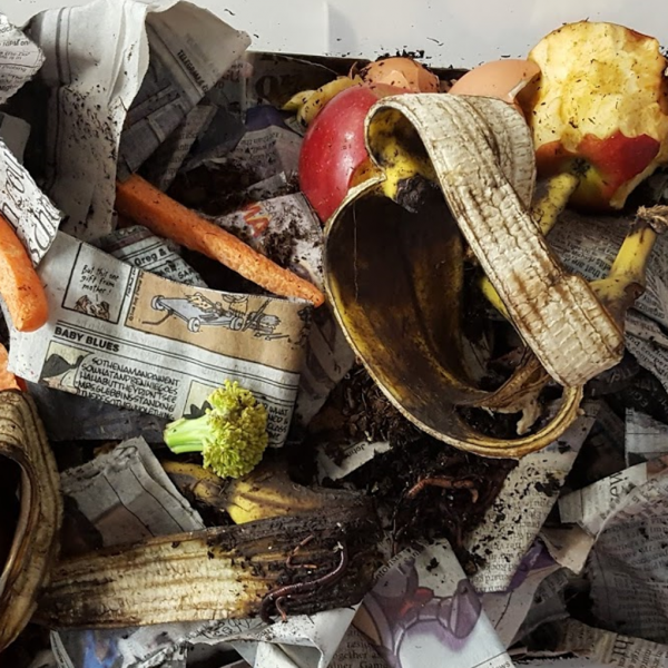 Worm Composting in the Classroom